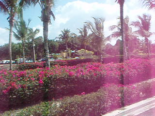 Casa del Mar Cozumel Hotel & Dive Resort: Carriage Ride past the Gardens and Confrence Center at CDM