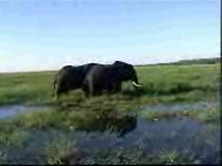 Chobe National Park照片