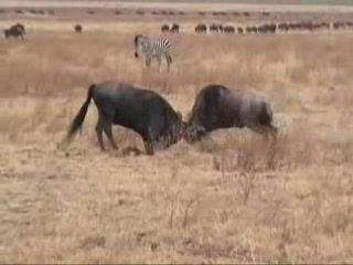 Video Tour of Ngorongoro Crater