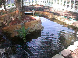 Hernando, Флорида: OUR NEW POND