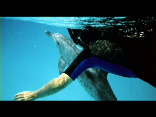 Isla Gran Bahama: Snorkeling With Atlantic Spotted & Bottlenose Dolphins