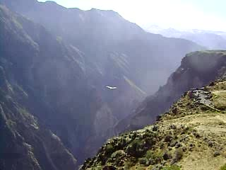 Arequipa, Pérou : Condors in the Colca Canyon