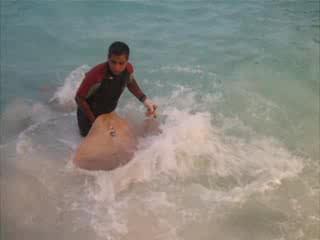 Kuramathi Island Resort: Kuramathi - feeding the stingrays