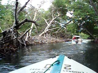 Margarita Island, Venezuela: La Restinga Mangrove Swamps
