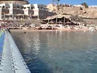 Reef Oasis Beach Resort : Reef Oasis view