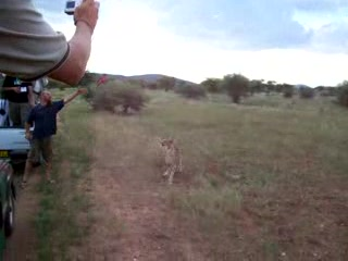 Otjitotongwe Cheetah Park: Feeding time