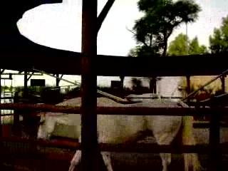 Fundacion Real Escuela Andaluza del Arte Ecuestre: filmke