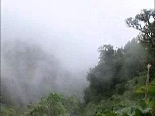 The Cloud Forest of Mindo ecuador