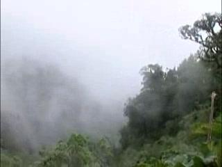 Миндо, Эквадор: The Cloud Forest of Mindo ecuador