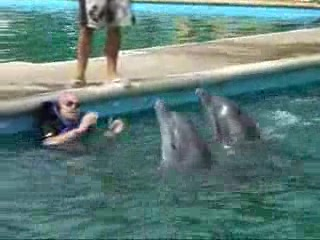 Nuevo Vallarta, Mexique : Trainer FAD Part 2  Dolphins