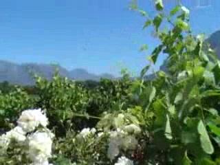 Vrede en Lust Winery: Vrede en Lust Wine Estate