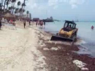 Holiday Inn Resort Aruba - Beach Resort & Casino : Seaweed problem in Holiday Inn Aruba