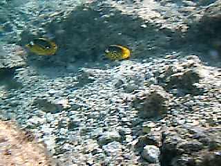 Sea life - Marsa Alam