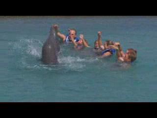Hyatt Ziva Cancun : Dolphins: Delphinus at Dreams Cancun