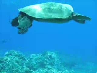 ‪‪Kihei‬, هاواي: Snorkeling with Maui Eco Tours‬