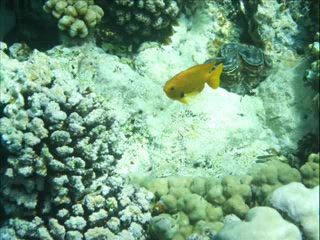 Marsa Alam, Égypte : Snorkelling Tulip Resort