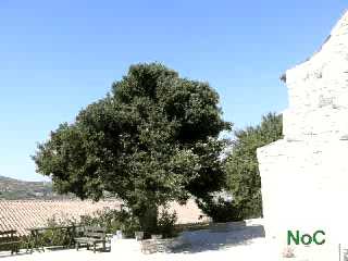 ‪قبرص: Cyprus ancient trees - awe inspiring natural monuments‬