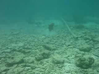 Kuramathi Island Resort: Titan Trigger - Kuramathi House Reef