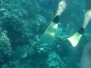 Paradise Island & The Mangroves (Cayo Arena): Snorkelling at paradise island