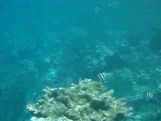 Paradise Island & The Mangroves (Cayo Arena): snorkelling at paradise island 2