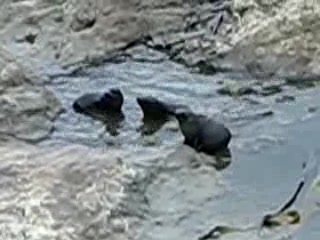 Havelock, New Zealand: Seals video
