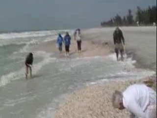 Pulau Captiva, FL: Shelling on Captiva Island Florida