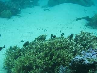 Papetoai, Polinesia Francesa: Sheraton Moorea