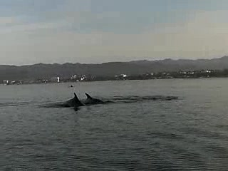 Wildlife Connection: Dolphins