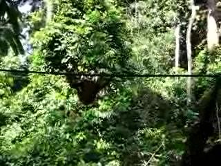 real swingers seks porno