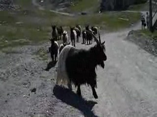 Zermatt, Schweiz: Visitors