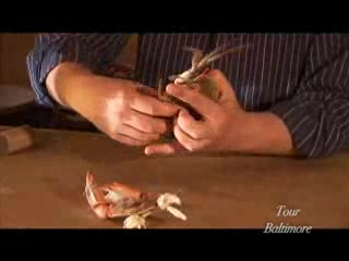 Maryland: How to eat a crab