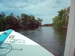 Margarita Island, Venezuela: Mangrove Swamps
