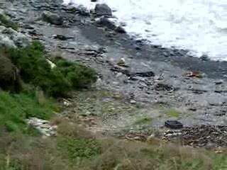 Kaka Point, Neuseeland: Yellow-Eyed Penguins, Roaring Bay