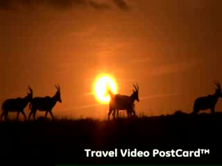 Shamwari Game Reserve, Sydafrika: Shamwari Family Travel Safari: South Africa