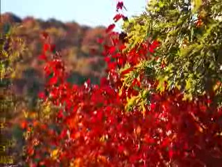 Fall Color 2008 near Asheville