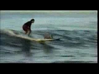 Surfing Pig - Kauai