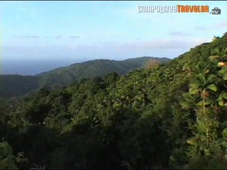 Tobago Rainforest