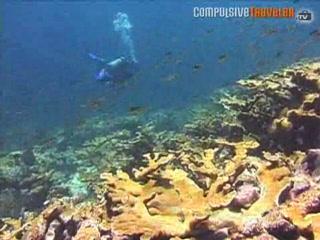 Юнион-Айлэнд: Union Diving