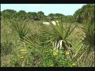 Lemon Bay / Myakka Trail Scenic Highway Video Part 2