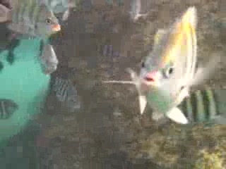Fishes at Yal Ku Lagoon!