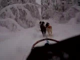 Levi, Suomi: Husky ride