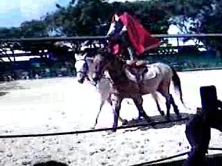 Punta Cana, République dominicaine : The Horse Show