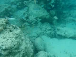 Underwater Isla Mujeres