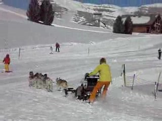 Flumserberg, Husky sledding.