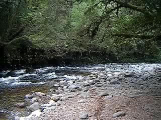 Franklin River Nature Trail: Franklin River