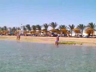 SUNRISE Select Royal Makadi Resort: Fish and Beach