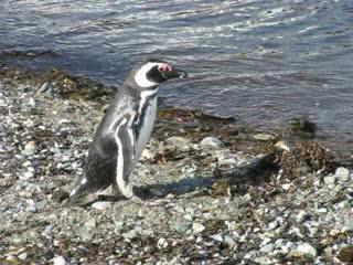Punta Arenas, Chile: 02 - Isla Magdalena - 03