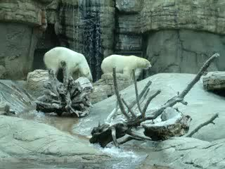 San Diego Zoo: Polar Bear
