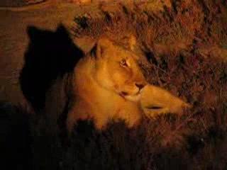 Etosha National Park, นามิเบีย: . . . .the night safari . . . .