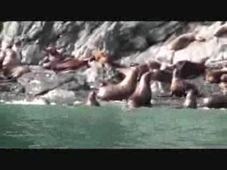 วาลเดซ, อลาสกา: Lu-Lu Belle Cruise - Wildlife